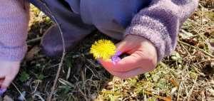 Blomst i hånd