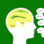 Hjernen06