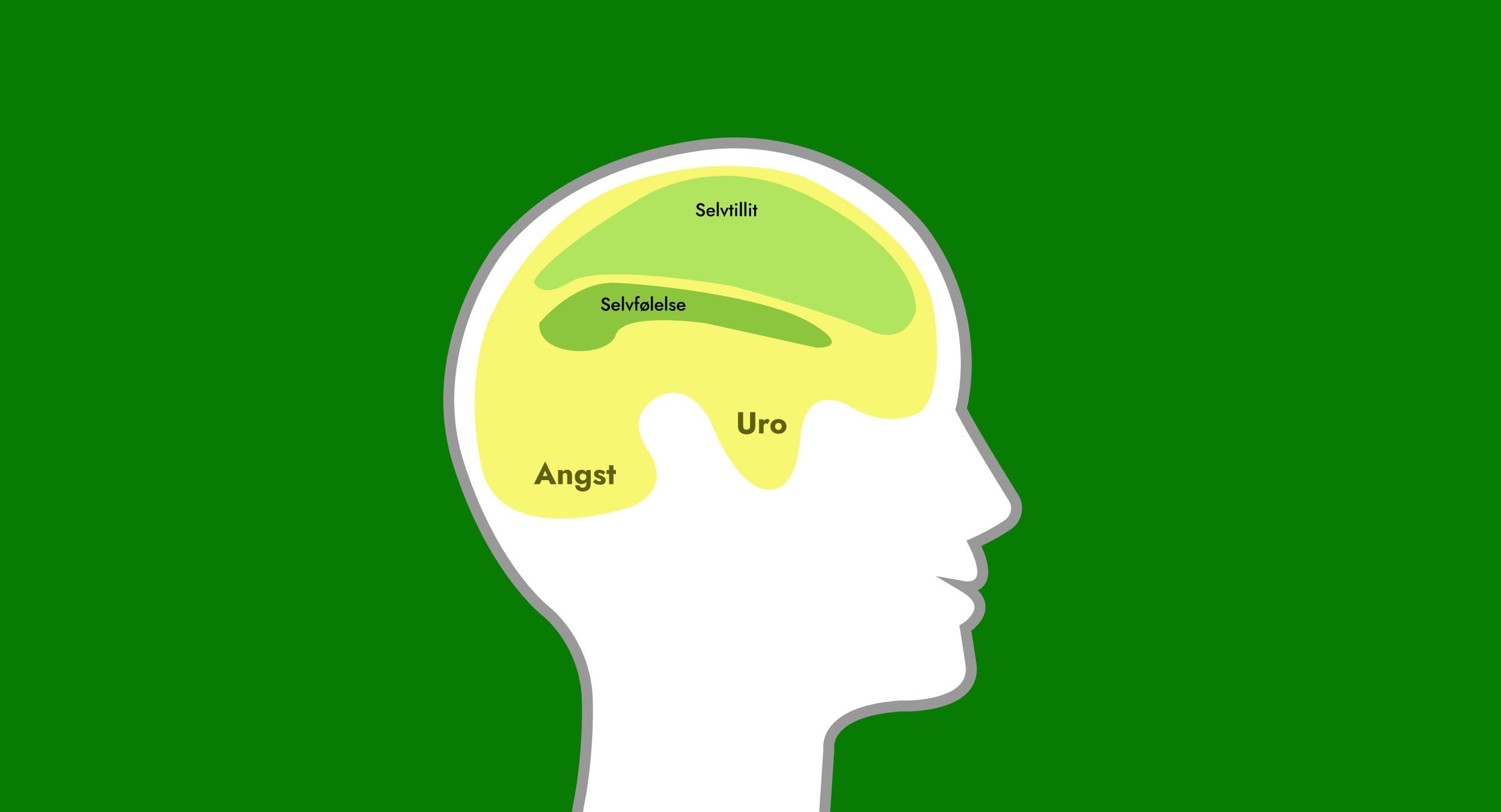 Hjernen04